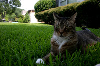 20050807_Cats